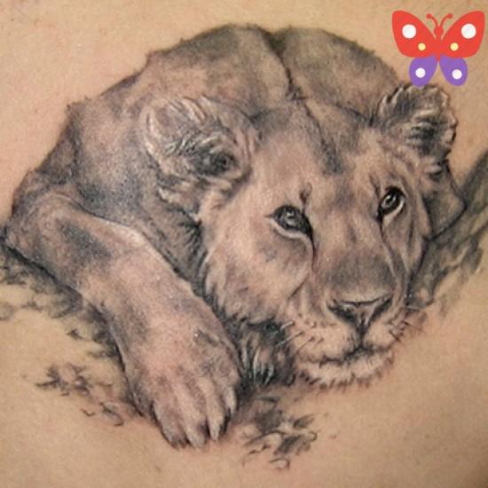 aslan-dovmeleri-2